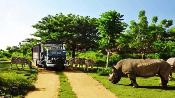 Bali Safari & Marine Pack